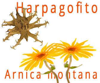 gel arnica y harpagofito