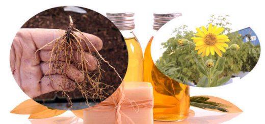 arnica como planta medicinal