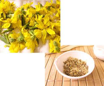 Beneficios del té de arnica tomado