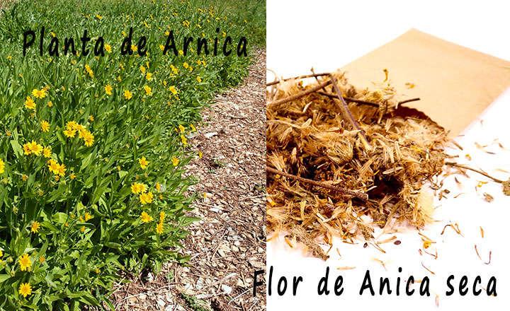 Usos de la flor de arnica seca